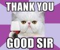 persian_cat_thank_you_meme1.jpg